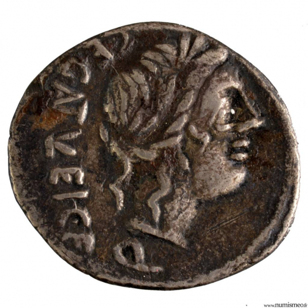 Egnatuleia quinaire -97